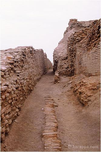 This street, called Divinity Street by the early excavators, as a small drain with brick coverings. The street runs north south along the east side of the College building. The massive walls on the right are the edges of houses buried beneath the Buddhist period Stupa.