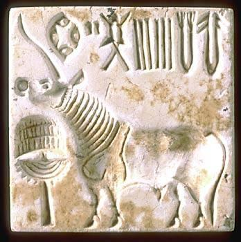 A steatite unicorn seal from Harappa with Indus script. This seal was found in the central area of Mound E and dates to Period 3B or early 3C, around 2450-2200 BC. When pressed into clay the impression will be reversed. Since the Indus script may have been read from right to left, the last two signs visible at the top right hand edge of the seal would in fact be the last two signs of the inscription. They thus would be positioned in the same order as seen on the Early Harappan sherd (previous image) that da