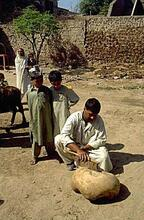 Excavation assistant Abdul Jabbar from Harappa town begins cleaning the ringstone after excavation.