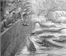 1870 drawing of crocodiles being fed