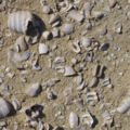 Shell Middens of the Coast of Balochistan - Paolo Biagi